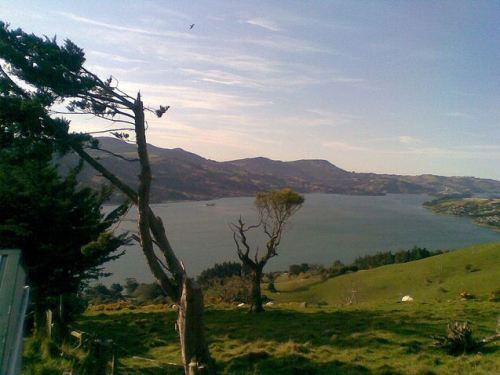 Otago_harbour